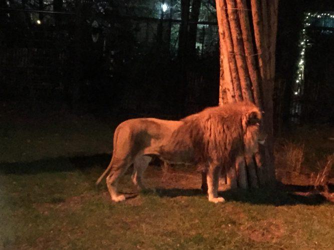 Naar de avond dierentuin